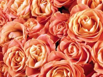 les fleurs du bien strasbourg thomas wagner 2